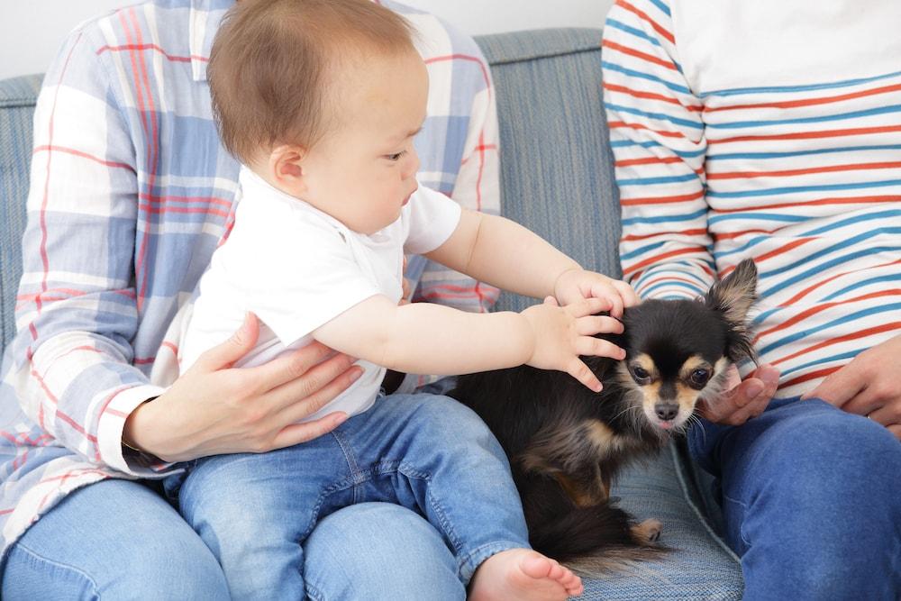 乳幼児が動物と育つ心配な点と対処法